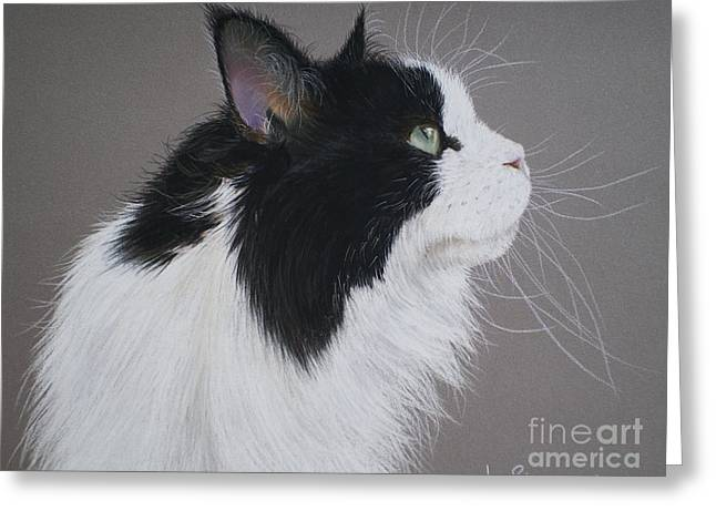 Maine Pastels Greeting Cards - Keeps - Maine Coon Greeting Card by Joanne Simpson