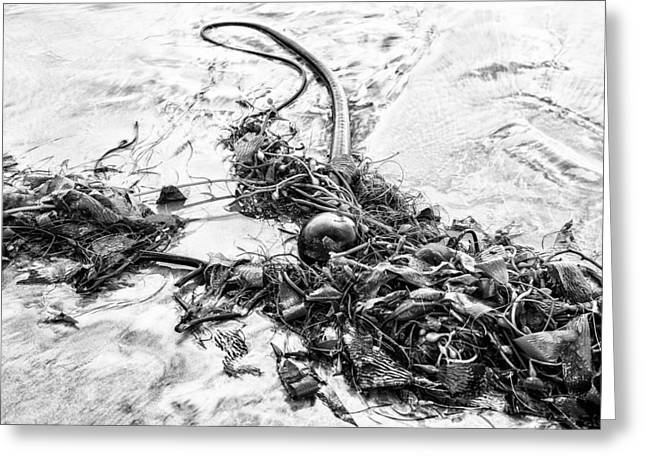 Kelp Greeting Cards - Kelp Monochrome Greeting Card by Joseph S Giacalone
