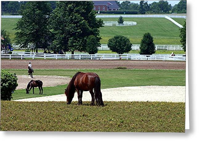 Kentucky Horse Park Digital Art Greeting Cards - Kentucky Horse Park - Horses Grazing 2 Greeting Card by Thia Stover
