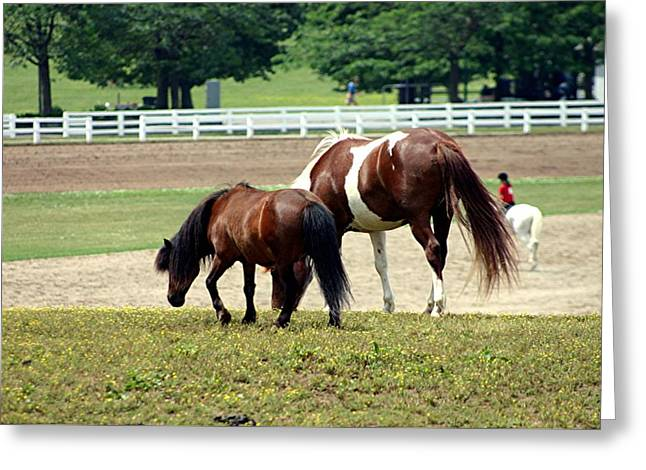 Kentucky Horse Park Tapestries - Textiles Greeting Cards - Kentucky Horse Park - Horses Grazing 3 Greeting Card by Thia Stover