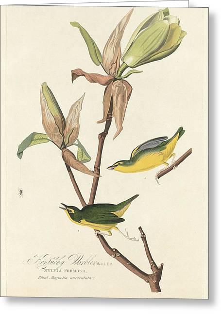 Small Bird Greeting Cards - Kentucky Warbler Greeting Card by John James Audubon