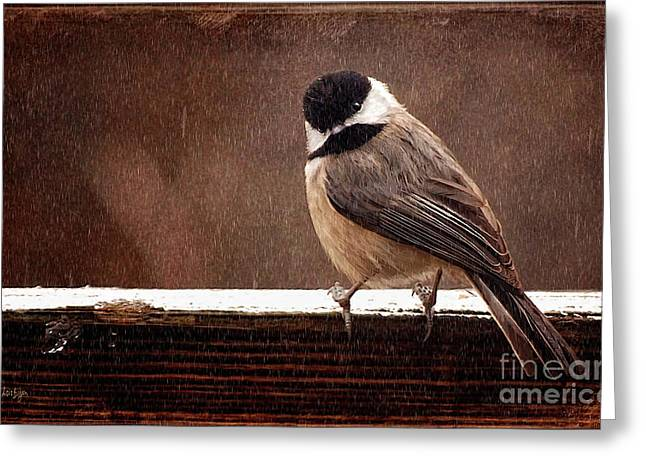 Birds In Winters Greeting Cards - Kerflustered Greeting Card by Lois Bryan