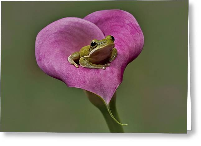 Calla Lily Greeting Cards - Kermit Hangs Out Greeting Card by Susan Candelario