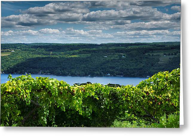 Vines Greeting Cards - Keuka Vineyard I Greeting Card by Steven Ainsworth