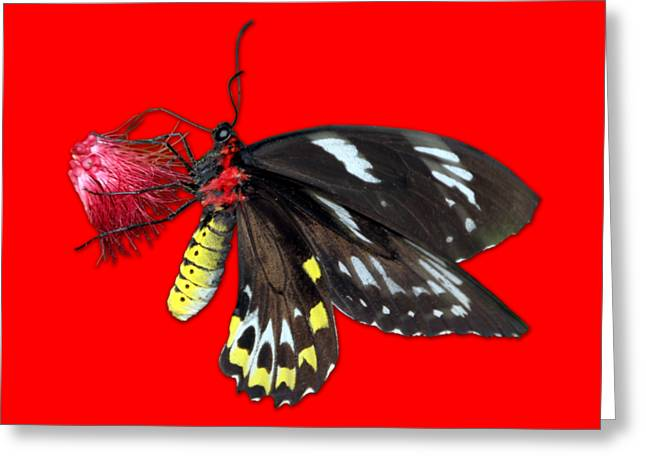 Transparent Clothes Greeting Cards - Key West Butterfly 12 Greeting Card by Bob Slitzan
