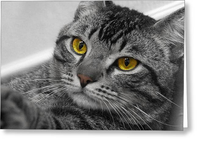 Cats Photographs Greeting Cards - Kickin back Greeting Card by Craig Incardone