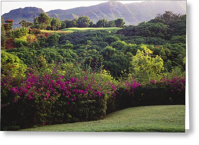 Putt Greeting Cards - Kiele Course, flowers and vegetation Greeting Card by Carl Shaneff - Printscapes