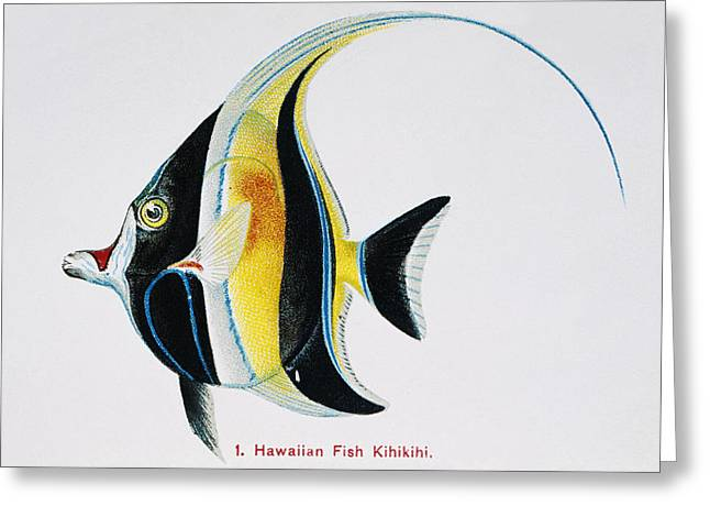 Frederick Greeting Cards - Kihikihi Greeting Card by Hawaiian Legacy Archive - Printscapes