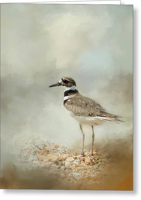 Deer At The Beach Greeting Cards - Killdeer On The Rocks Greeting Card by Jai Johnson