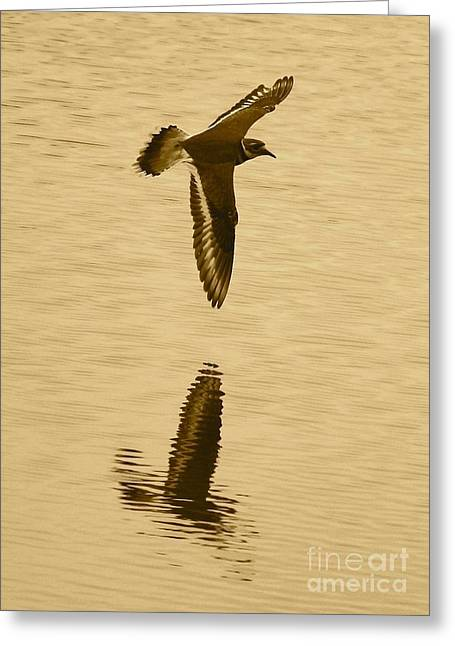 Killdeer Over The Pond Greeting Card by Carol Groenen