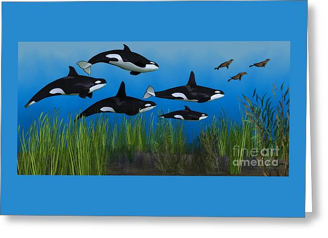 Killer Whale Pod Greeting Card by Corey Ford