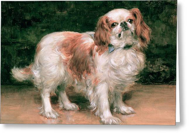 Toys Paintings Greeting Cards - King Charles Spaniel Greeting Card by George Sheridan Knowles