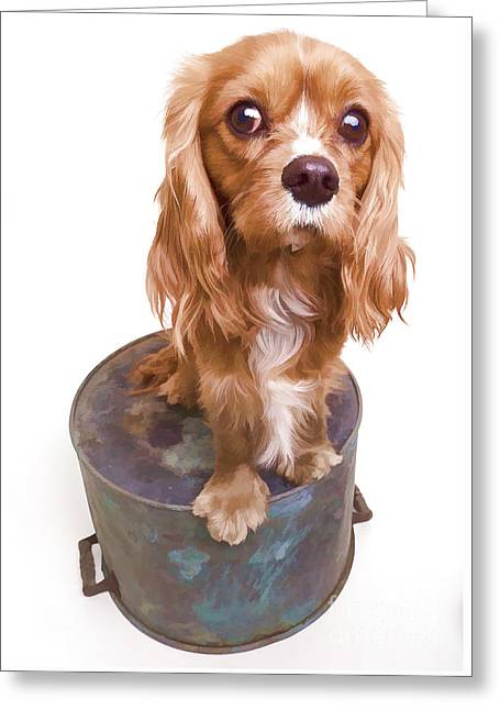 Dog Photographs Greeting Cards - King Charles Spaniel Puppy Greeting Card by Edward Fielding