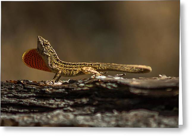 Lizard Head Greeting Cards - King of the Anoles Greeting Card by Chris Bordeleau