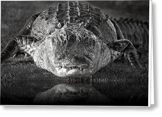 King Of The Glades Greeting Card by Mark Andrew Thomas
