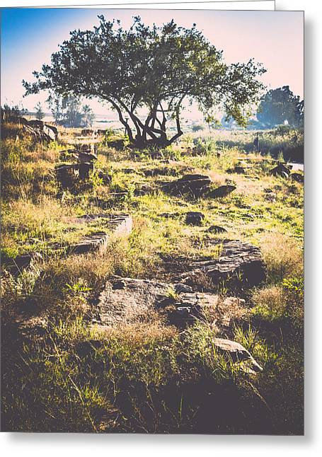 Photo Art Gallery Greeting Cards - King of the hill Greeting Card by George Fivaz