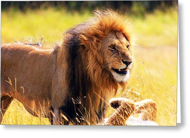 Lions Greeting Cards - King of the Jungle Greeting Card by Ann Muthumbi