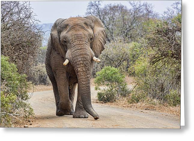 Reserve Greeting Cards - King of the Road Greeting Card by Stephen Stookey