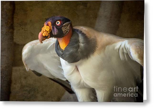 King Vulture Greeting Card by Jamie Pham