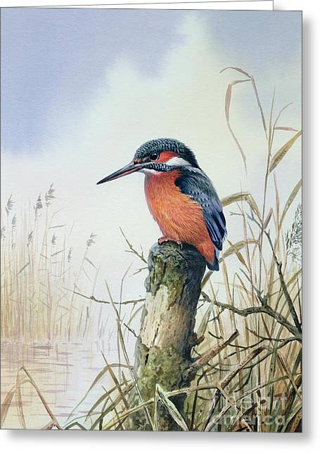 Water Bird Greeting Cards - Kingfisher Greeting Card by Carl Donner
