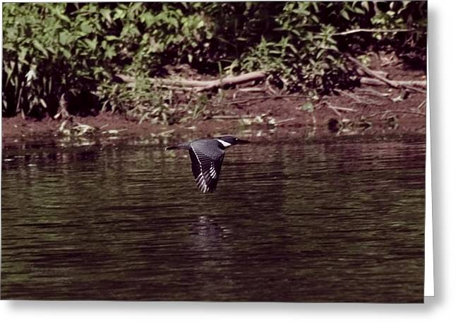 Duke Island Park Greeting Cards - Kingfisher Flying Greeting Card by Warren M Gray