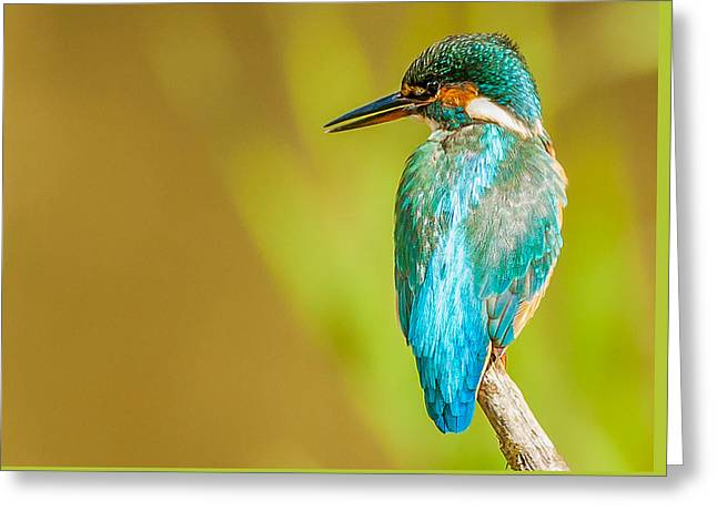 Kingfisher Greeting Card by Paul Neville