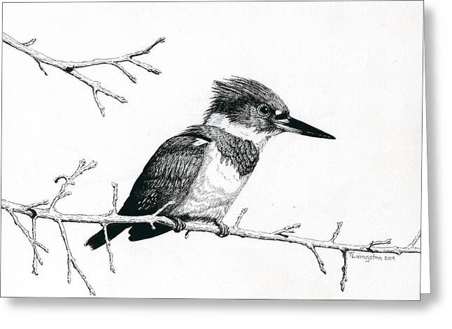 Belt Drawings Greeting Cards - Kingfisher Greeting Card by Timothy Livingston