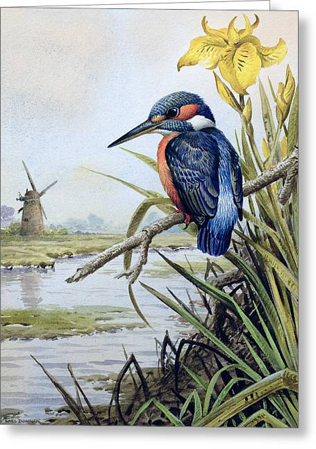 Kingfisher With Flag Iris And Windmill Greeting Card by Carl Donner