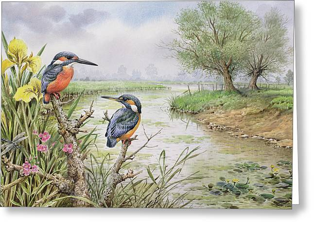 Kingfishers On The Riverbank Greeting Card by Carl Donner