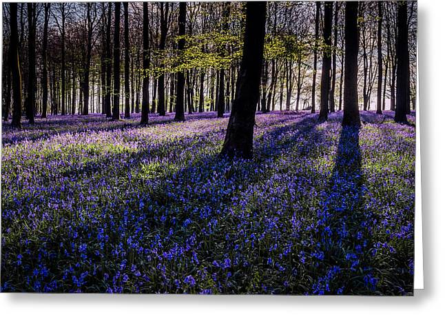 Bluebells Greeting Cards - Kings Wood Bluebells Greeting Card by Ian Hufton