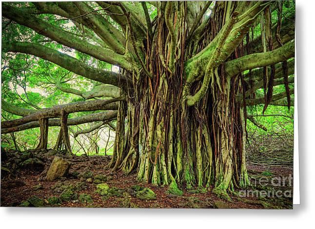 Kipahulu Banyan Tree Greeting Card by Inge Johnsson