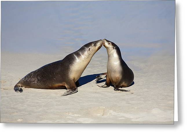 Yearling Greeting Cards - Kiss Greeting Card by Mike  Dawson