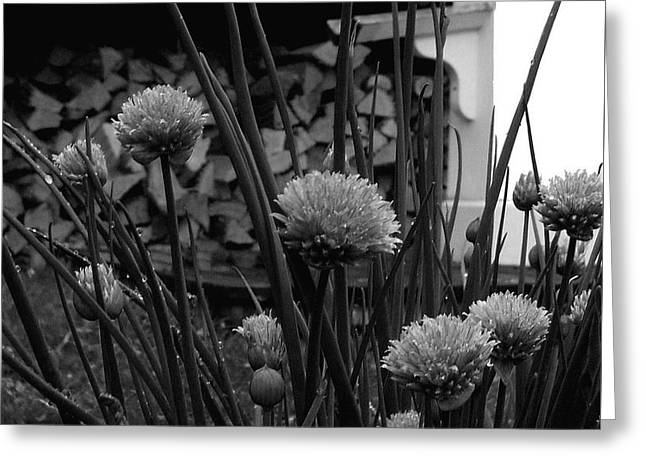Shed Digital Art Greeting Cards - Kitchen Garden Greeting Card by Val Arie