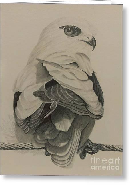 Kites Drawings Greeting Cards - Kite Greeting Card by Robyn Garnet