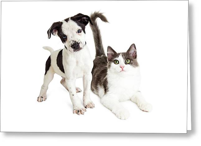 Kitten And Puppy Together Greeting Card by Susan Schmitz