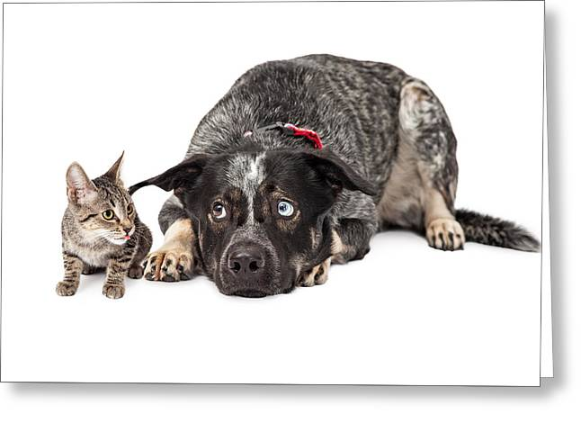 Kitten Annoying Patient Dog Greeting Card by Susan Schmitz
