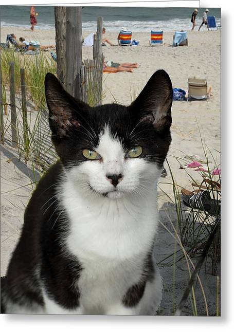 Cats Show Greeting Cards - Kitten Beach Day Greeting Card by Joyce StJames