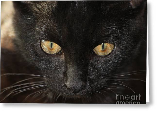 Pen Greeting Cards - Kitten Eyes Greeting Card by Laura L Leatherwood