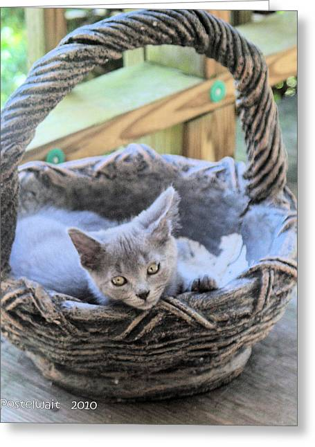 Best Sellers -  - Garden Statuary Greeting Cards - Kitten in a Basket Greeting Card by Carolyn Postelwait