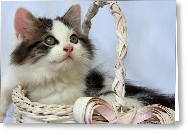 Cute Kitten Photographs Greeting Cards - Kitten in Basket Greeting Card by Jai Johnson