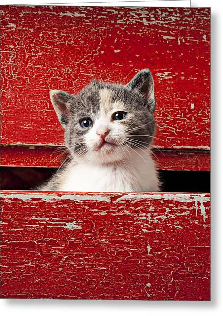Drawer Greeting Cards - Kitten in red drawer Greeting Card by Garry Gay