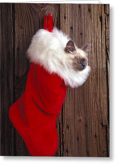 Cuddly Photographs Greeting Cards - Kitten in stocking Greeting Card by Garry Gay