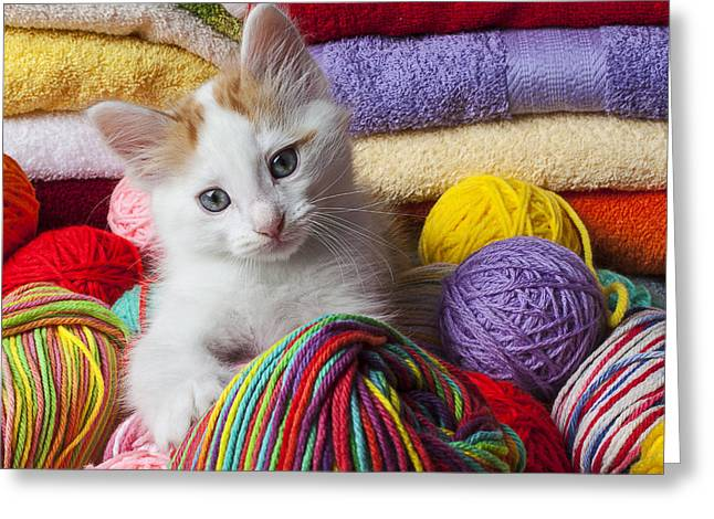 Pussy Greeting Cards - Kitten in yarn Greeting Card by Garry Gay