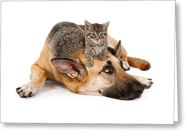 Full-length Portrait Photographs Greeting Cards - Kitten laying on German Shepherd Greeting Card by Susan  Schmitz