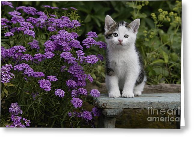 House Pet Greeting Cards - Kitten With Flowers Greeting Card by Jean-Louis Klein & Marie-Luce Hubert