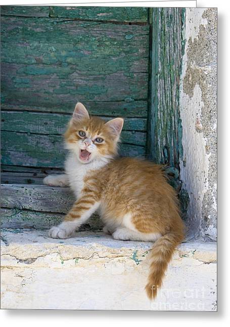 Kitten Yawning Greeting Card by Jean-Louis Klein & Marie-Luce Hubert