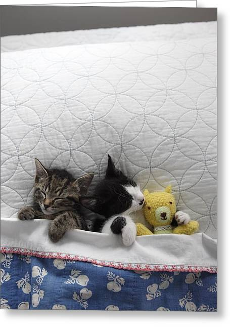 Cute Kitten Greeting Cards - Kittens In Bed With Toy Greeting Card by Gillham Studios