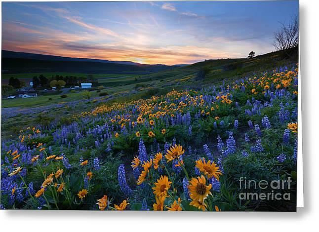 Mountain Valley Greeting Cards - Kittitas Spring Sunset Greeting Card by Mike Dawson