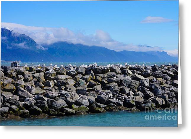 Pacific Ocean Prints Greeting Cards - Kittiwakes on Alaskan Jetty Greeting Card by Jennifer White