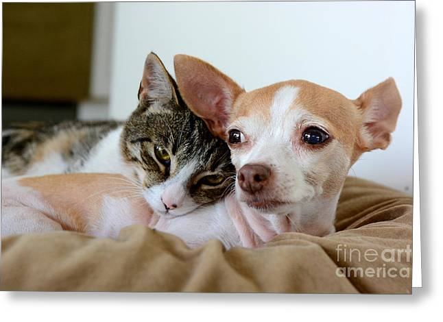 Puppies Photographs Greeting Cards - Kitty Love Greeting Card by Kristin Lam